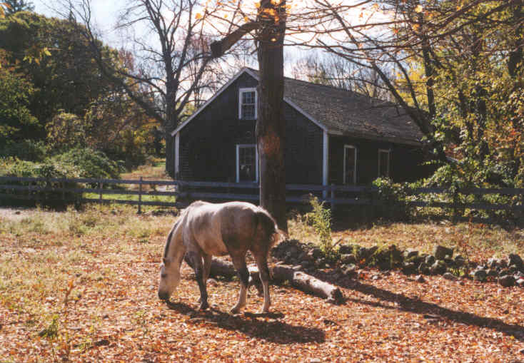 Horse Grazing in Yard