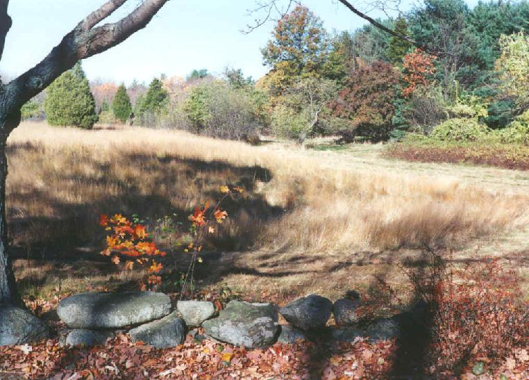 Wooded Area with Rocks in Foreground